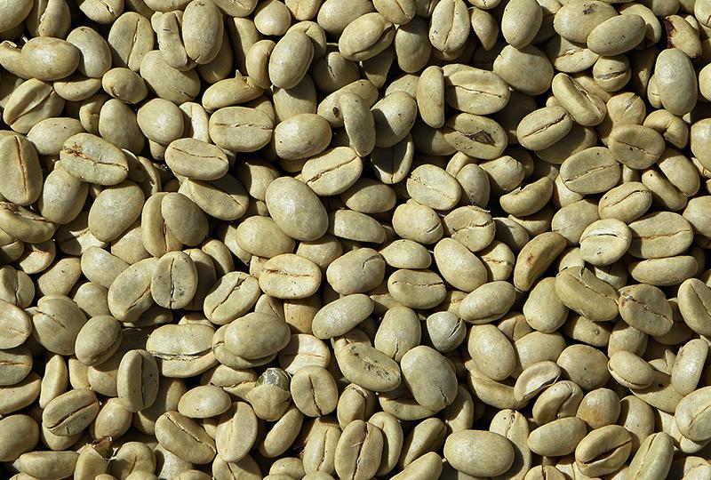 حبوب القهوة الخضراء